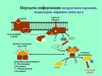 Передача информации посредством гормонов, медиаторов, нервного импульса Гормо...