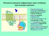 Механизм передачи информации через мембрану при помощи гормонов Гормон (перви...