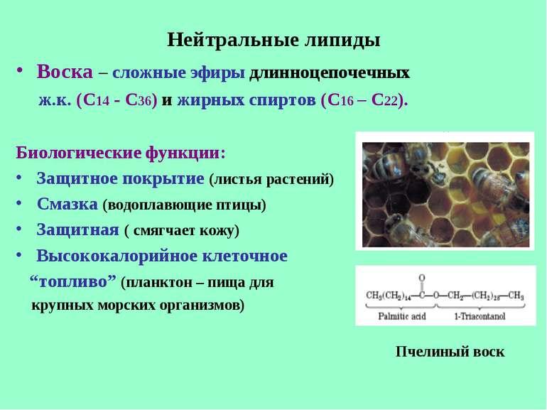 Нейтральные липиды Воска – сложные эфиры длинноцепочечных ж.к. (С14 - С36) и ...