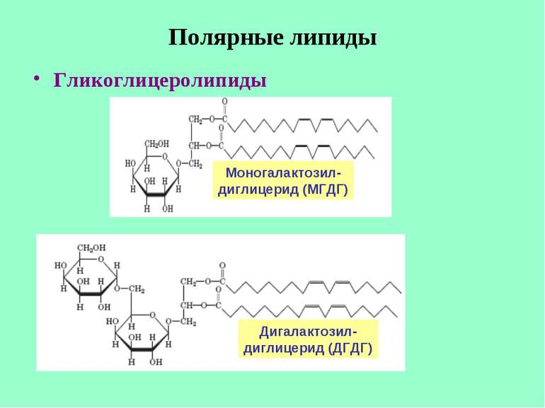 Полярные липиды Гликоглицеролипиды Моногалактозил- диглицерид (МГДГ) Дигалакт...