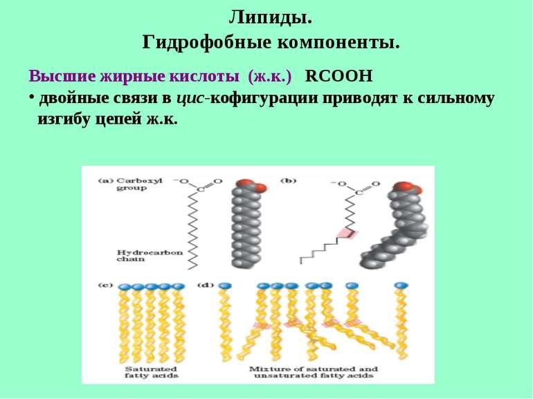Липиды. Гидрофобные компоненты. Высшие жирные кислоты (ж.к.) RCOOH двойные св...