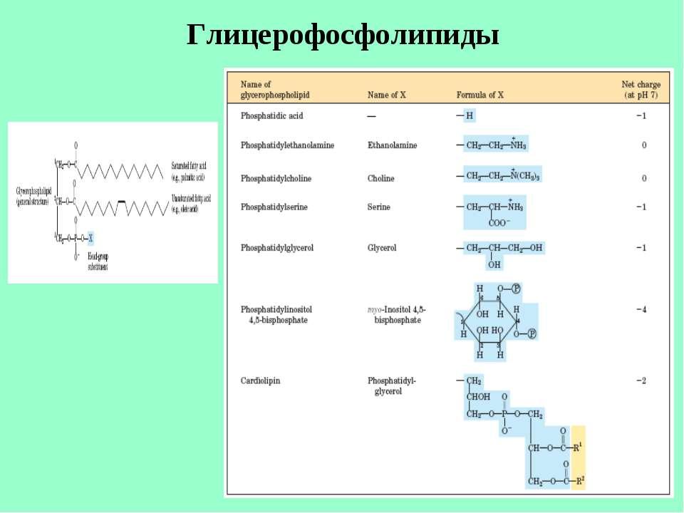Глицерофосфолипиды