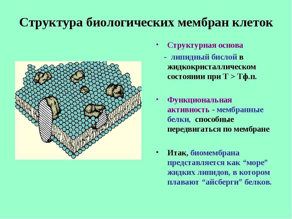 Структура биологических мембран клеток Структурная основа - липидный бислой в...
