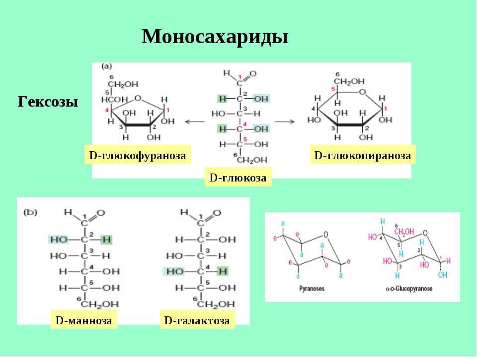 Моносахариды Гексозы D-глюкофураноза D-глюкоза D-глюкопираноза D-манноза D-га...