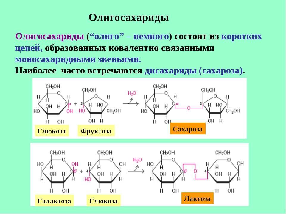 """Олигосахариды Олигосахариды (""""олиго"""" – немного) состоят из коротких цепей, об..."""