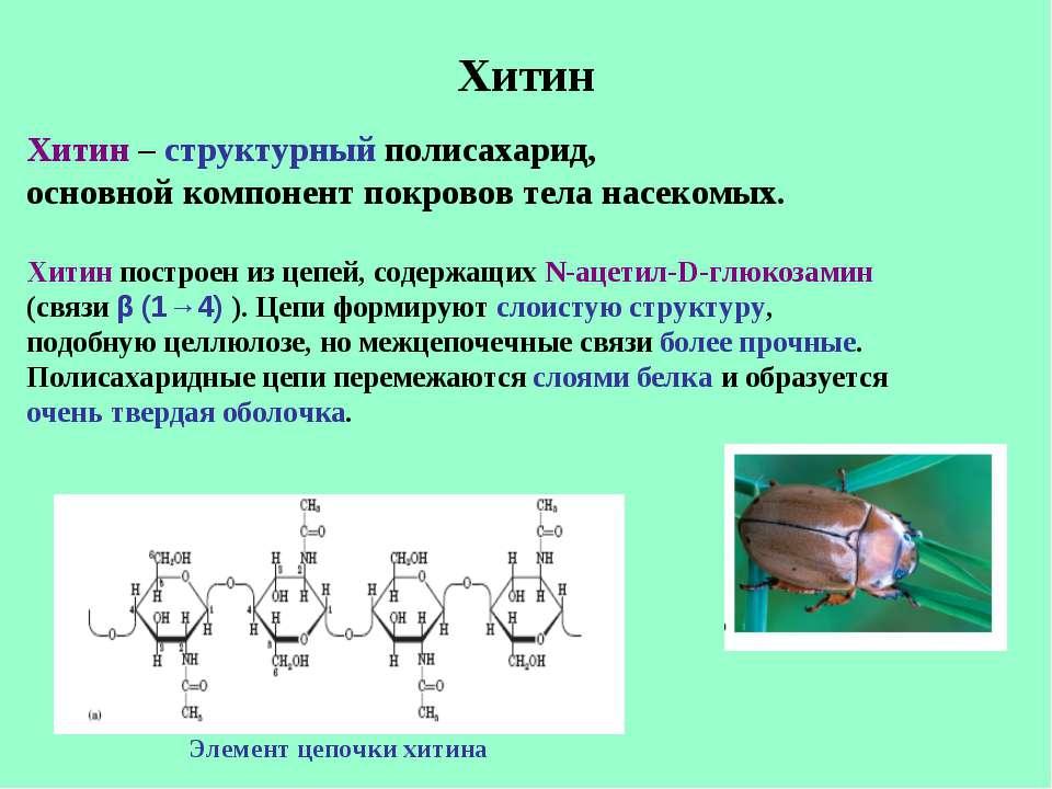 Хитин Хитин – структурный полисахарид, основной компонент покровов тела насек...