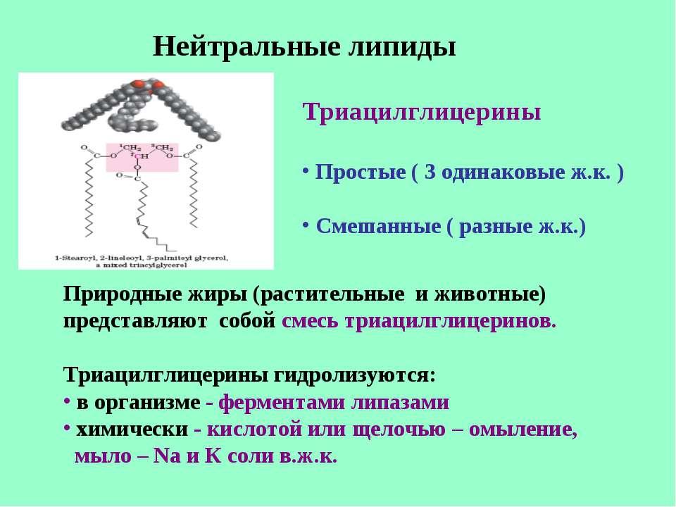 Нейтральные липиды Триацилглицерины Простые ( 3 одинаковые ж.к. ) Смешанные (...