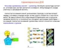 Мономер нуклеиновых кислот – нуклеотид. Молекула нуклеотида состоит из остатк...