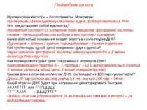Нуклеиновые кислоты – биополимеры. Мономеры: Нуклеотиды, дезоксирибонуклеотид...