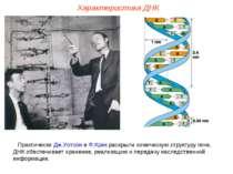 Практически Дж.Уотсон и Ф.Крик раскрыли химическую структуру гена. ДНК обеспе...