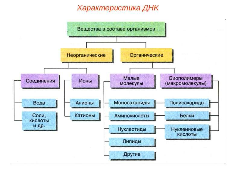 Характеристика ДНК