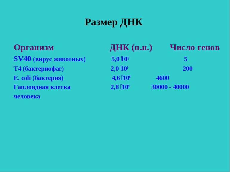 Размер ДНК Организм ДНК (п.н.) Число генов SV40 (вирус животных) 5,0 10³ 5 Т4...