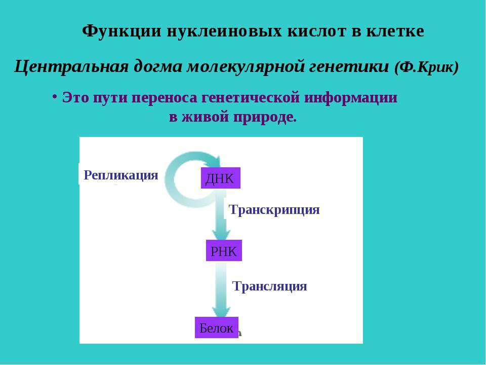 Центральная догма молекулярной генетики (Ф.Крик) Это пути переноса генетическ...