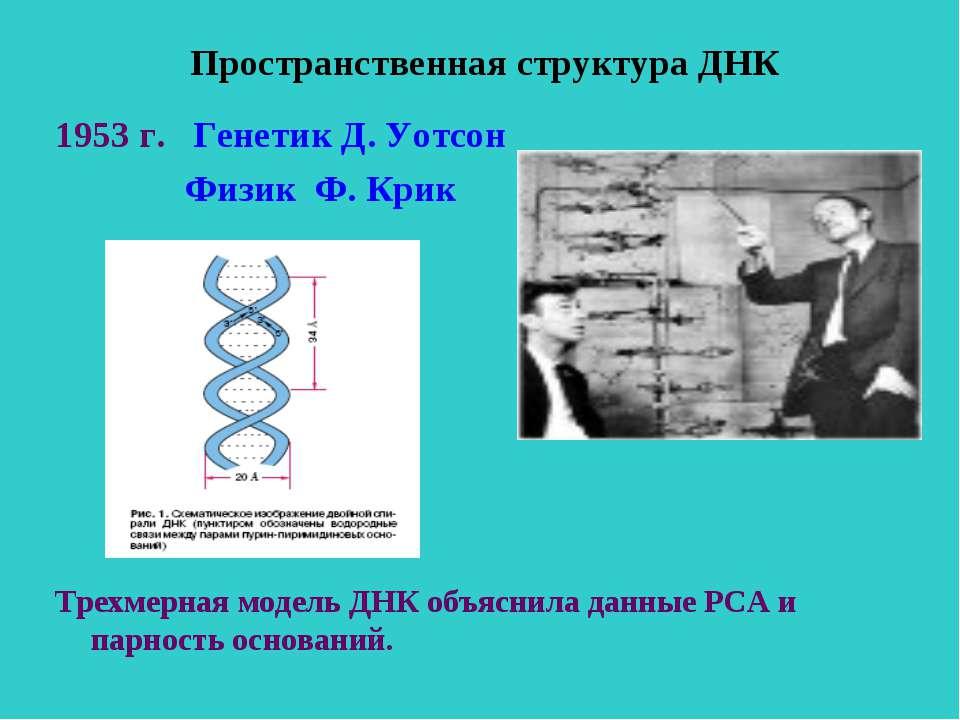 Пространственная структура ДНК 1953 г. Генетик Д. Уотсон Физик Ф. Крик Трехме...