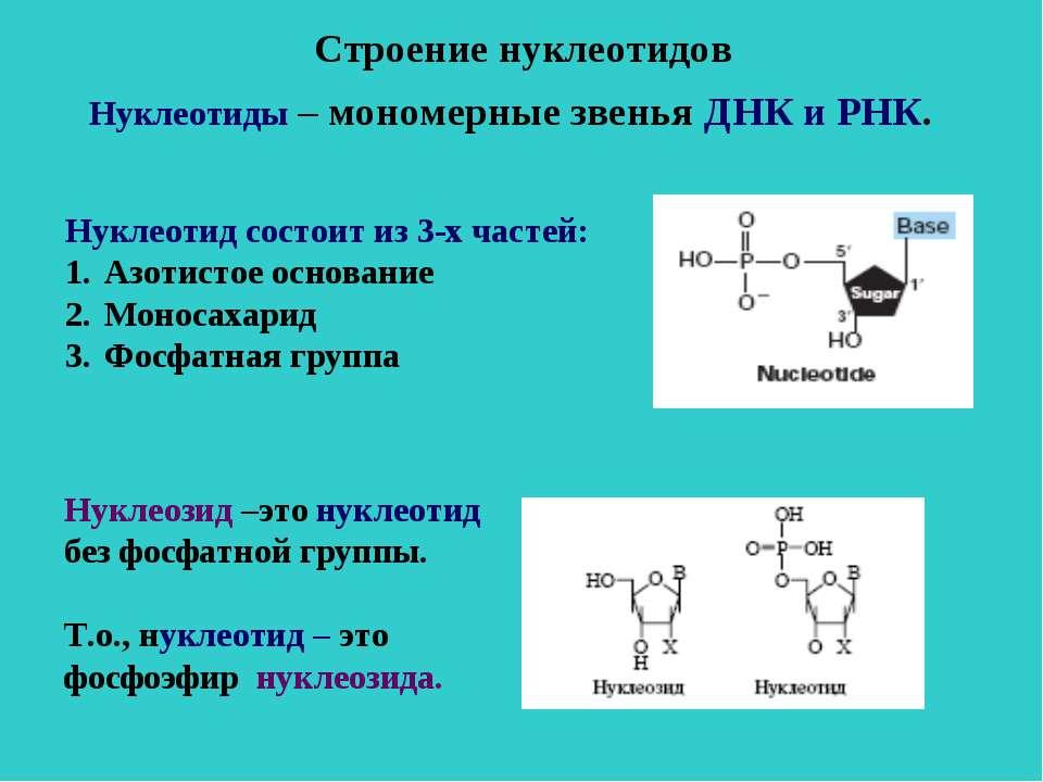 Строение нуклеотидов Нуклеотиды – мономерные звенья ДНК и РНК. Нуклеотид сост...