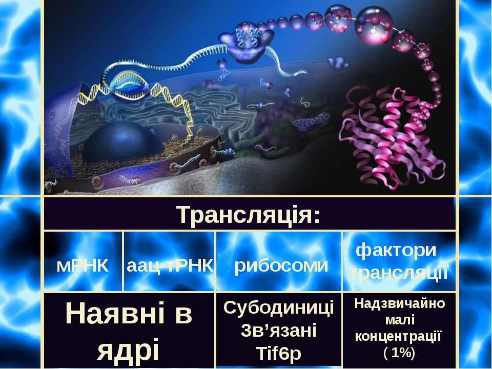 Трансляція: мРНК рибосоми аац-тРНК фактори трансляції Наявні в ядрі Субодиниц...