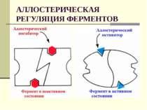 АЛЛОСТЕРИЧЕСКАЯ РЕГУЛЯЦИЯ ФЕРМЕНТОВ