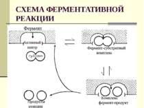 СХЕМА ФЕРМЕНТАТИВНОЙ РЕАКЦИИ