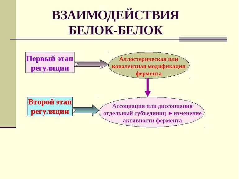 ВЗАИМОДЕЙСТВИЯ БЕЛОК-БЕЛОК Первый этап регуляции Второй этап регуляции Аллост...