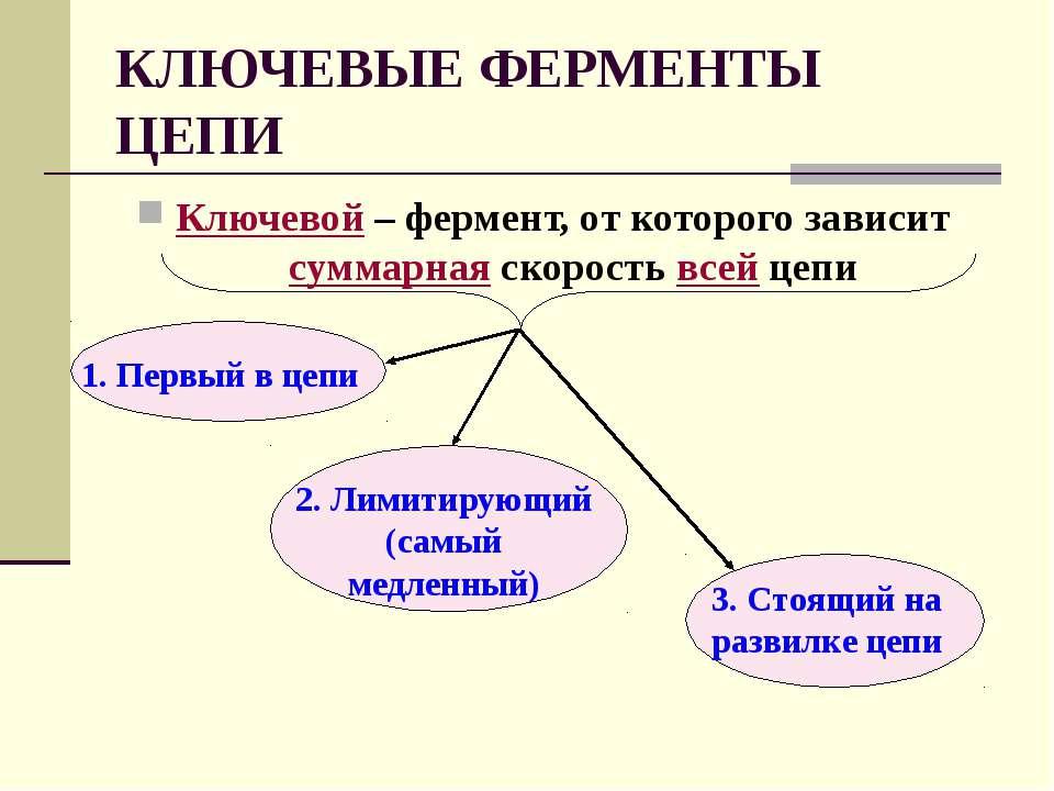 КЛЮЧЕВЫЕ ФЕРМЕНТЫ ЦЕПИ Ключевой – фермент, от которого зависит суммарная скор...