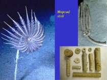 Морські лілії
