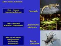 Види – ізоляти (мешканці рефугіумів) Типи живих викопних Гаттерія Деревовидна...