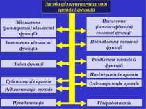 Засоби філогенетичних змін органів і функцій Збільшення (розширення) кількост...