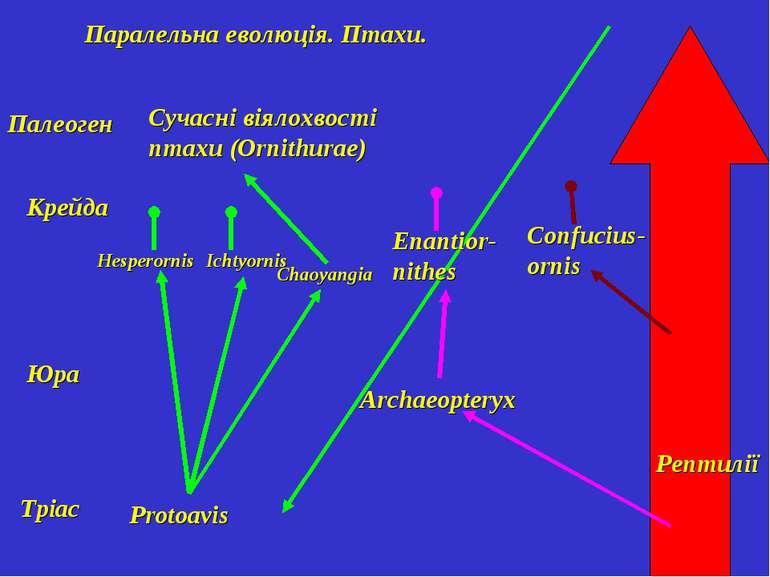 Паралельна еволюція. Птахи. Рептилії Тріас Юра Крейда Палеоген Protoavis Hesp...