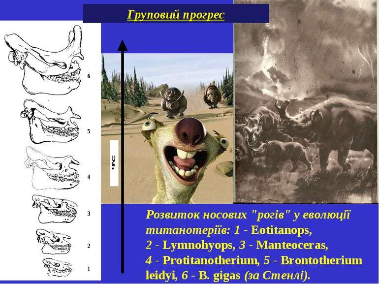 """Розвиток носових """"рогів"""" у еволюції титанотеріїв: 1-Eotitanops, 2-Lymnohy..."""