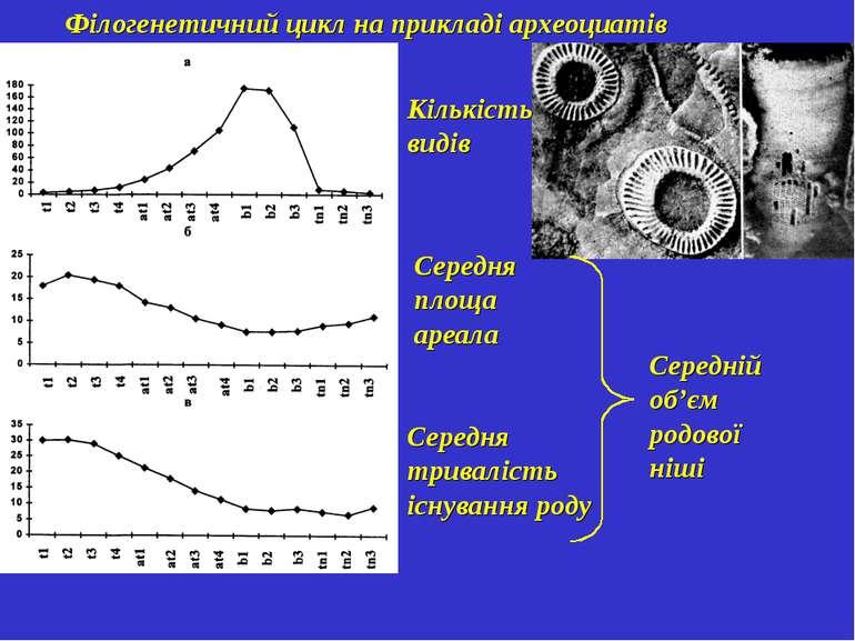 Філогенетичний цикл на прикладі археоциатів Кількість видів Середня площа аре...
