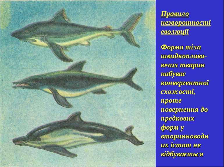 Правило незворотності еволюції Форма тіла швидкоплава-ючих тварин набуває кон...