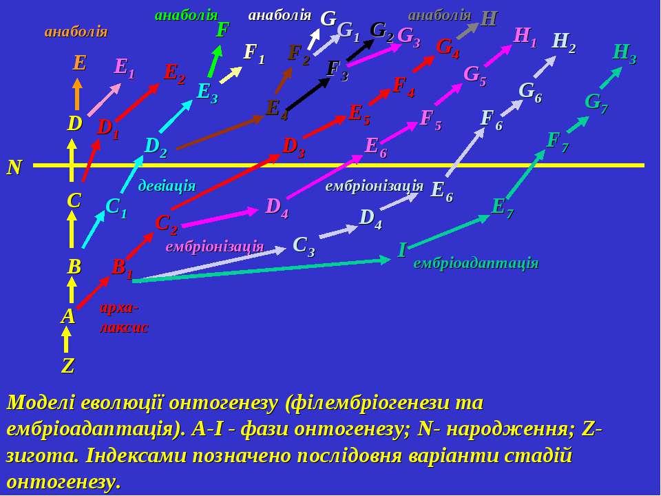 Моделі еволюції онтогенезу (філембріогенези та ембріоадаптація). A-І - фази о...