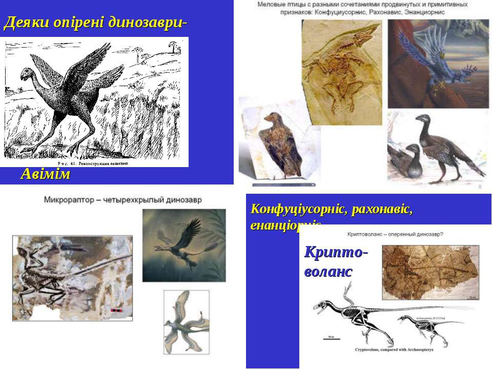 Деяки опірені динозаври-протоптахи Авімім Конфуціусорніс, рахонавіс, енанціор...