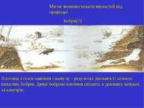Ми не можемо чекати милостей від природи! Бобри(?) Плотина з гілок каміння і ...