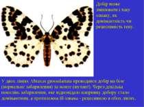 Добір може змінювати і таку ознаку, як домінантність чи рецесивність гену. У ...