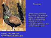 Типи видів Глухар (Tetrao urogallus) - прикліад монотипічного виду Досить лег...