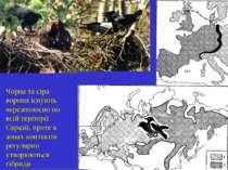 Чорна та сіра ворони існують черезполосно по всій теріторії Євразії, проте в ...