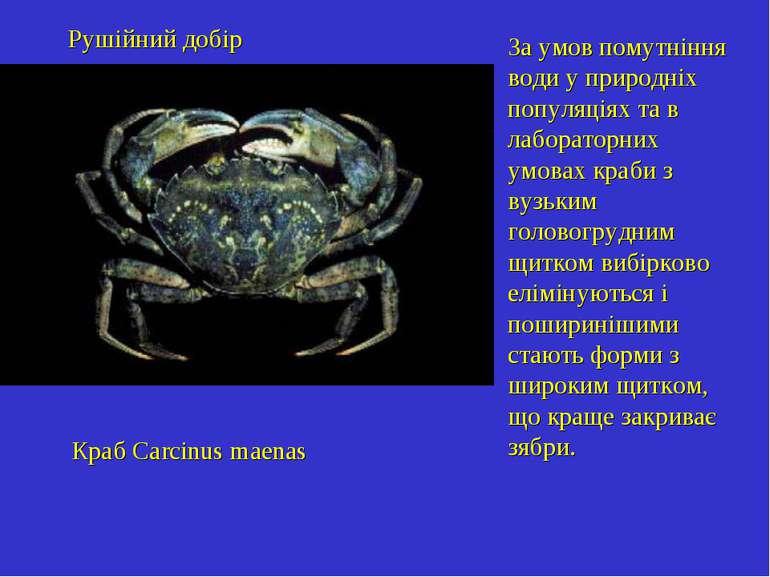 Краб Carcinus maenas За умов помутніння води у природніх популяціях та в лабо...