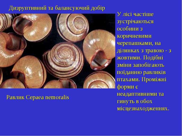 Дизруптивний та балансуючий добір Равлик Cepaea nemoralis У лісі частіше зуст...
