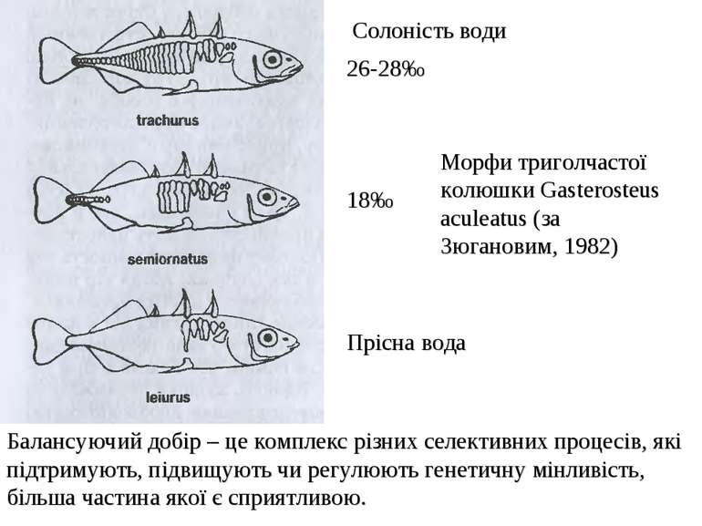 26-28‰ 18‰ Прісна вода Морфи триголчастої колюшки Gasterosteus aculeatus (за ...