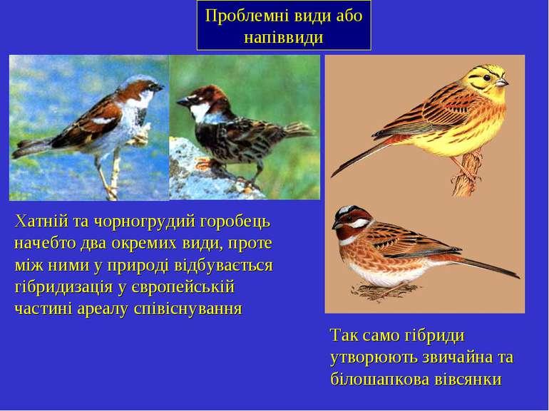 Проблемні види або напіввиди Хатній та чорногрудий горобець начебто два окрем...