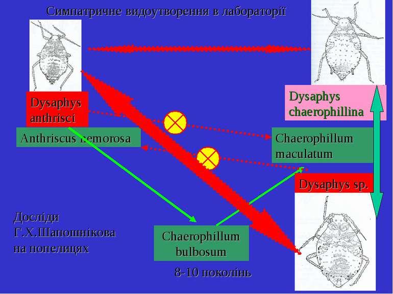 Симпатричне видоутворення в лабораторії Anthriscus nemorosa Chaerophillum bul...