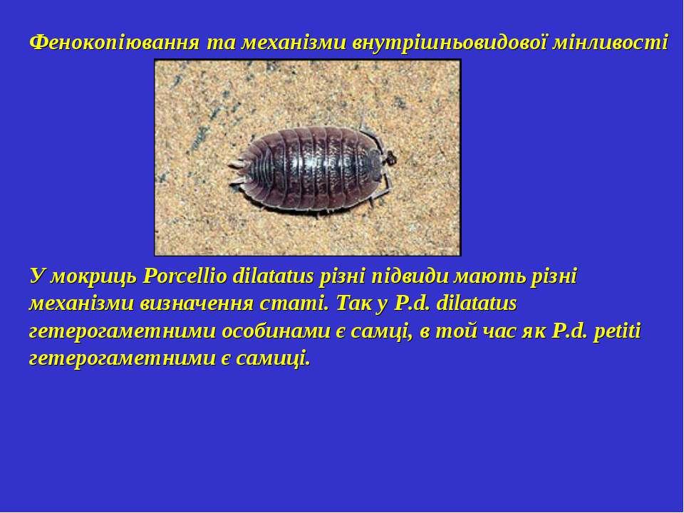 Фенокопіювання та механізми внутрішньовидової мінливості У мокриць Porcellio ...
