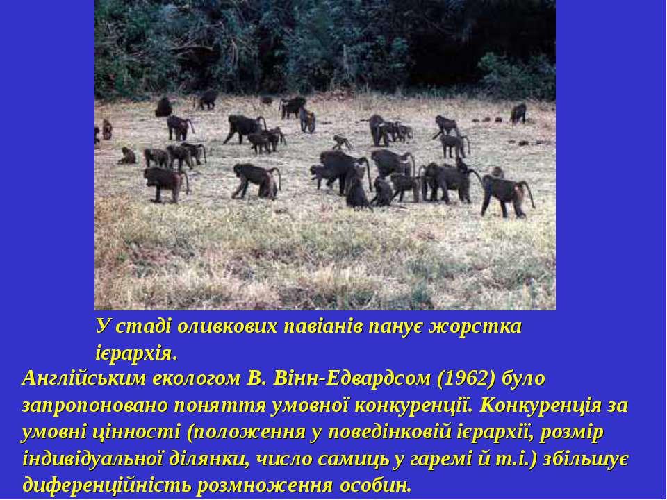 У стаді оливкових павіанів панує жорстка ієрархія. Англійським екологом В. Ві...
