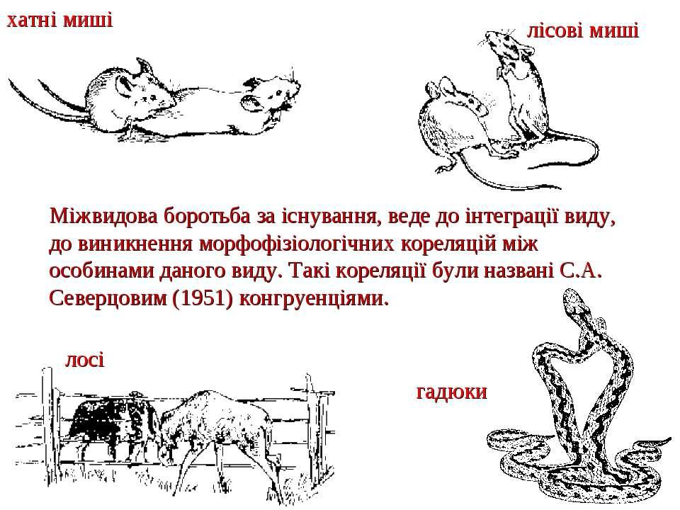 Міжвидова боротьба за існування, веде до інтеграції виду, до виникнення морфо...