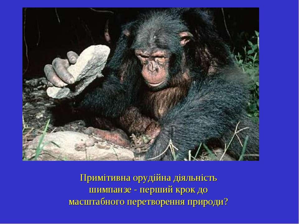 Примітивна орудійна діяльність шимпанзе - перший крок до масштабного перетвор...
