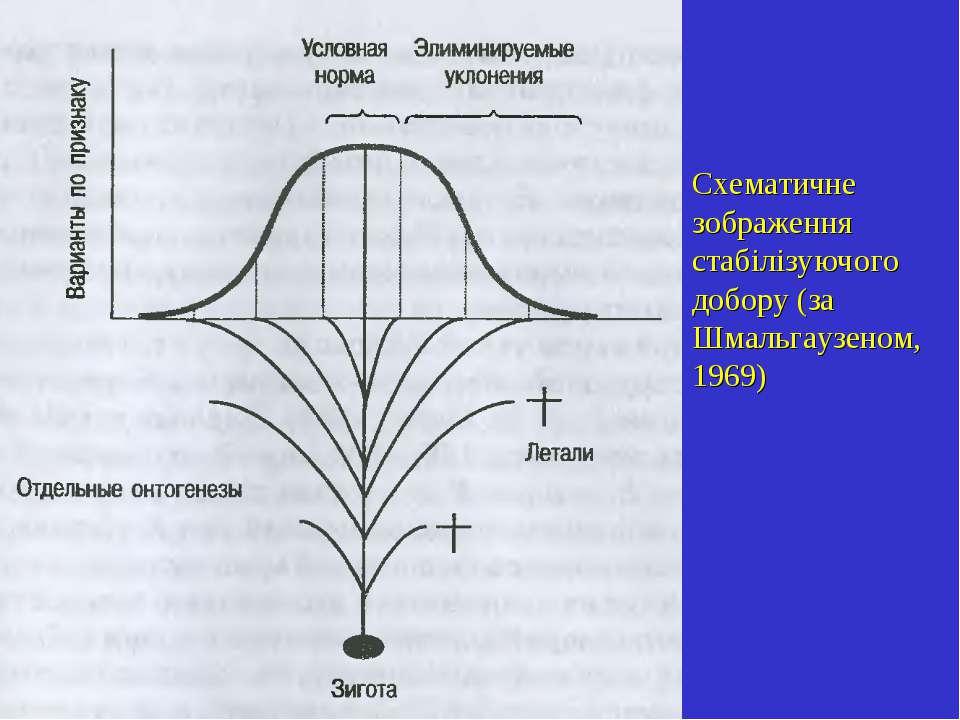 Схематичне зображення стабілізуючого добору (за Шмальгаузеном, 1969)