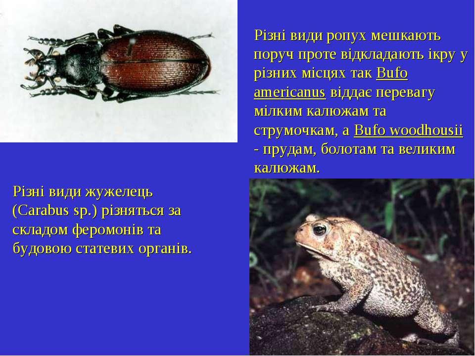 Різні види жужелець (Carabus sp.) різняться за складом феромонів та будовою с...