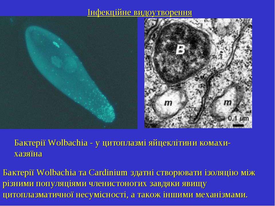 Інфекційне видоутворення Бактерії Wolbachia - у цитоплазмі яйцеклітини комахи...