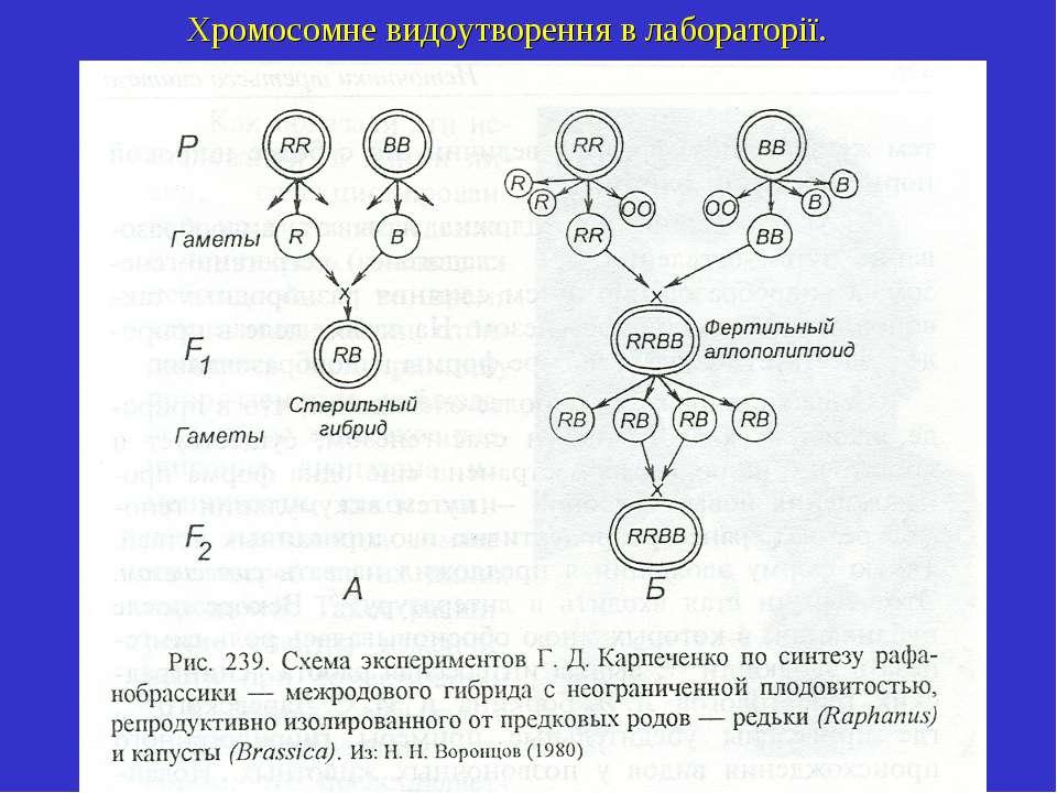 Хромосомне видоутворення в лабораторії.